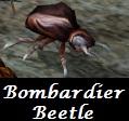 beetle_bombardier.jpg