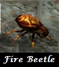 beetle_fire.jpg